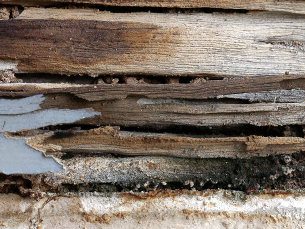 Three steps to removing termites and beetles
